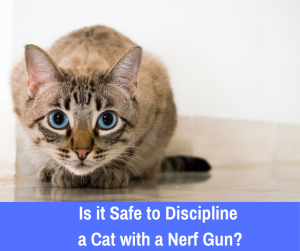 Cats, like dogs, can be trained to avoid certain undesirable behavior to their owner through the use of positive reinforcement.
